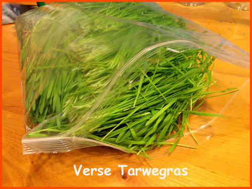 Smooth Verse Tarwegras in zak 500gram